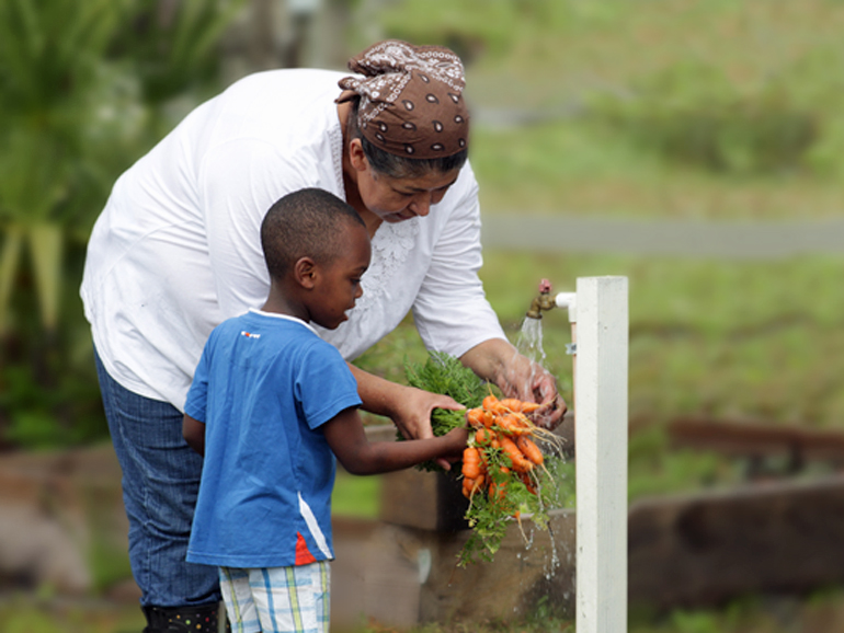 Sowing the seeds of a local food economy